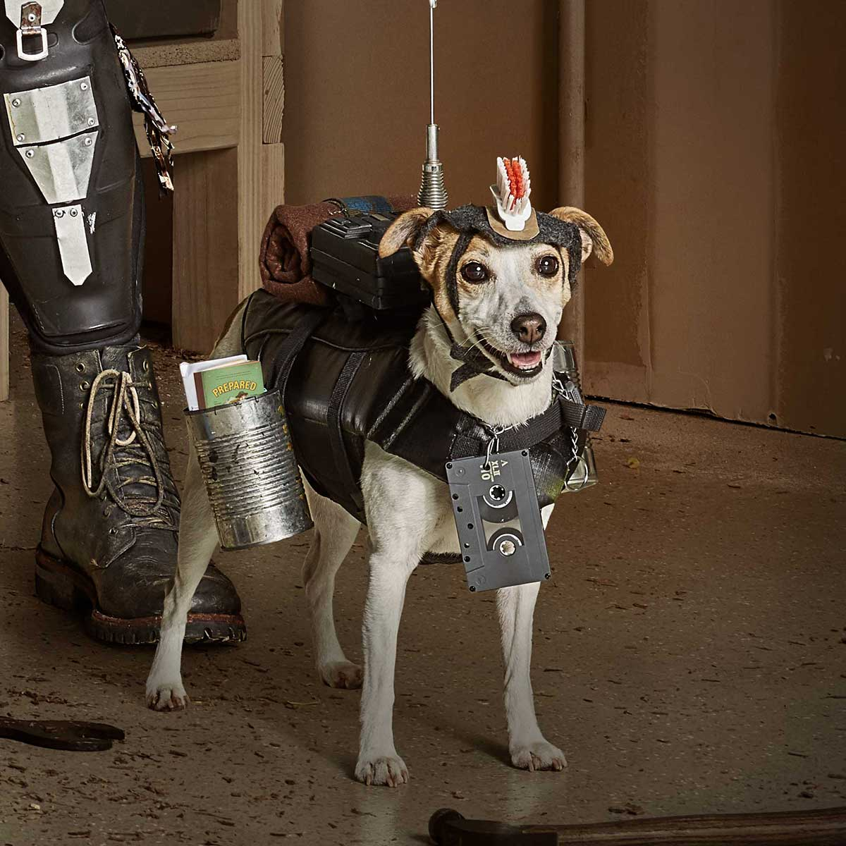 a dog dressed in Mad Max inspired costume