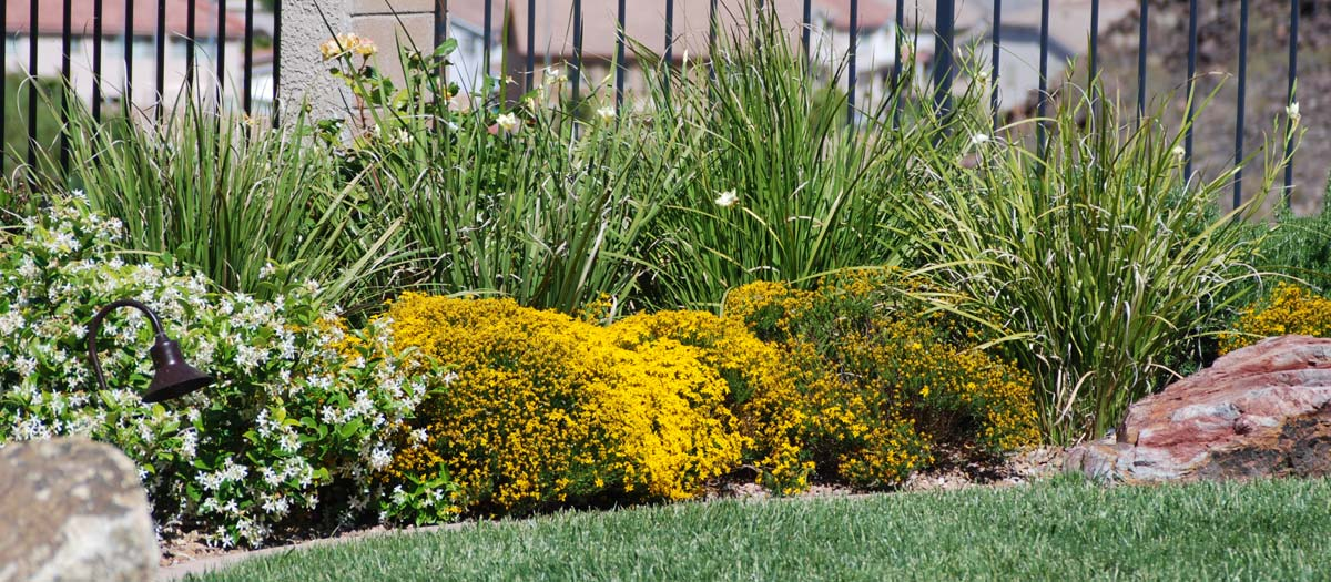 installing and maintaining your landscape
