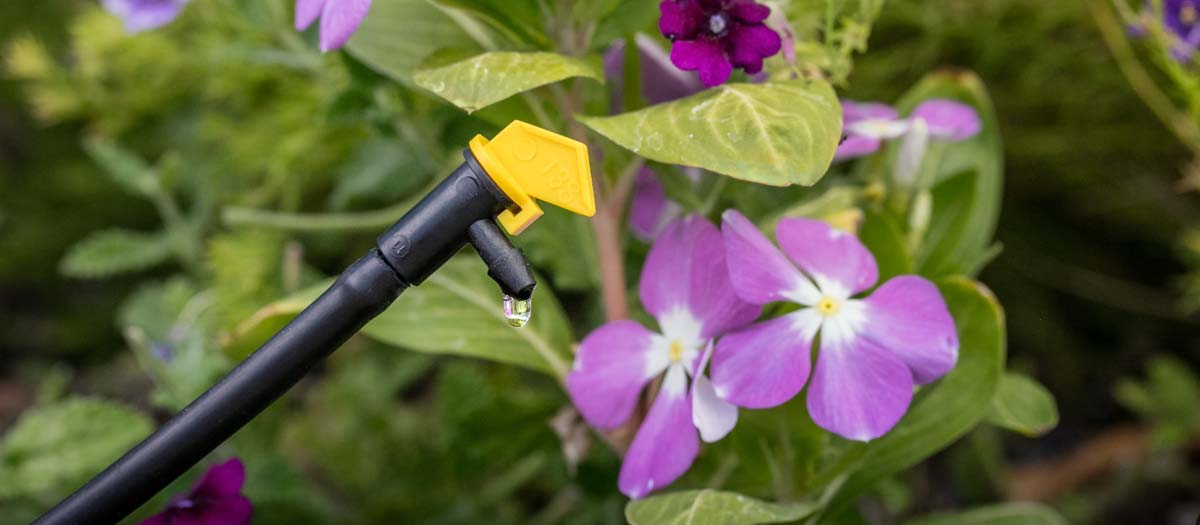 Drip irrigation system watering planted flowers