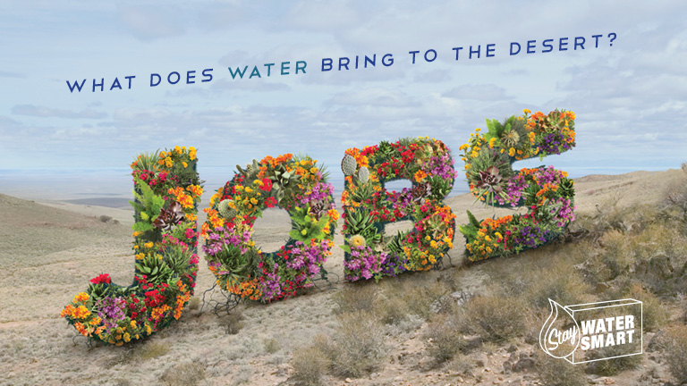 "flowers forming the word ""jobs"" in the desert"