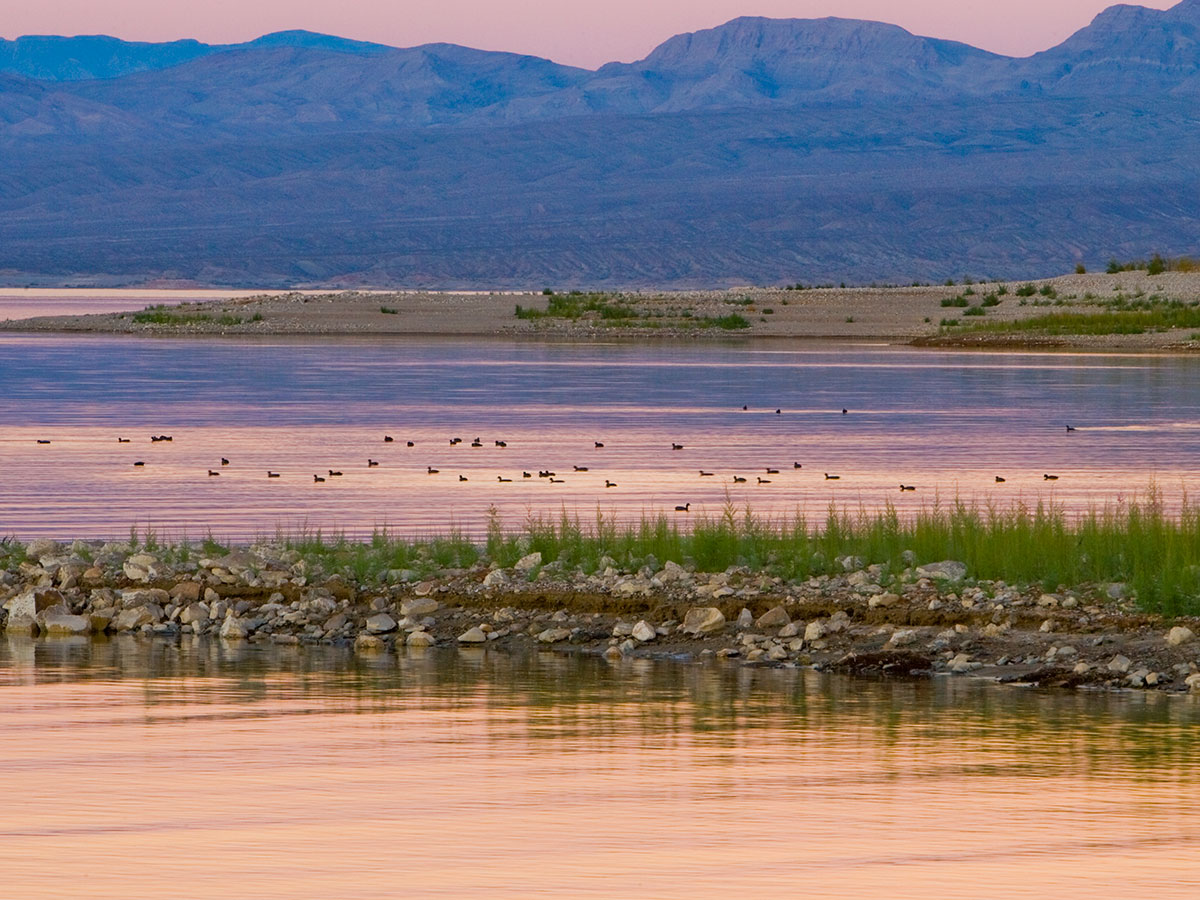 A view of Lake Mead at sunrise with birds on the water.