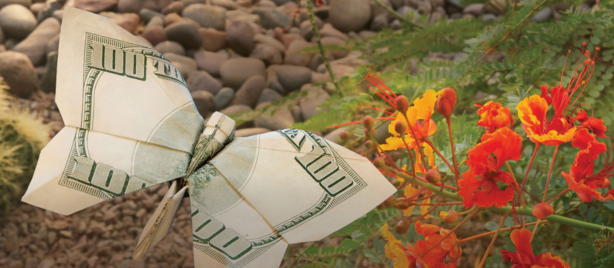 A $100 bill is folded into an origami butterfly
