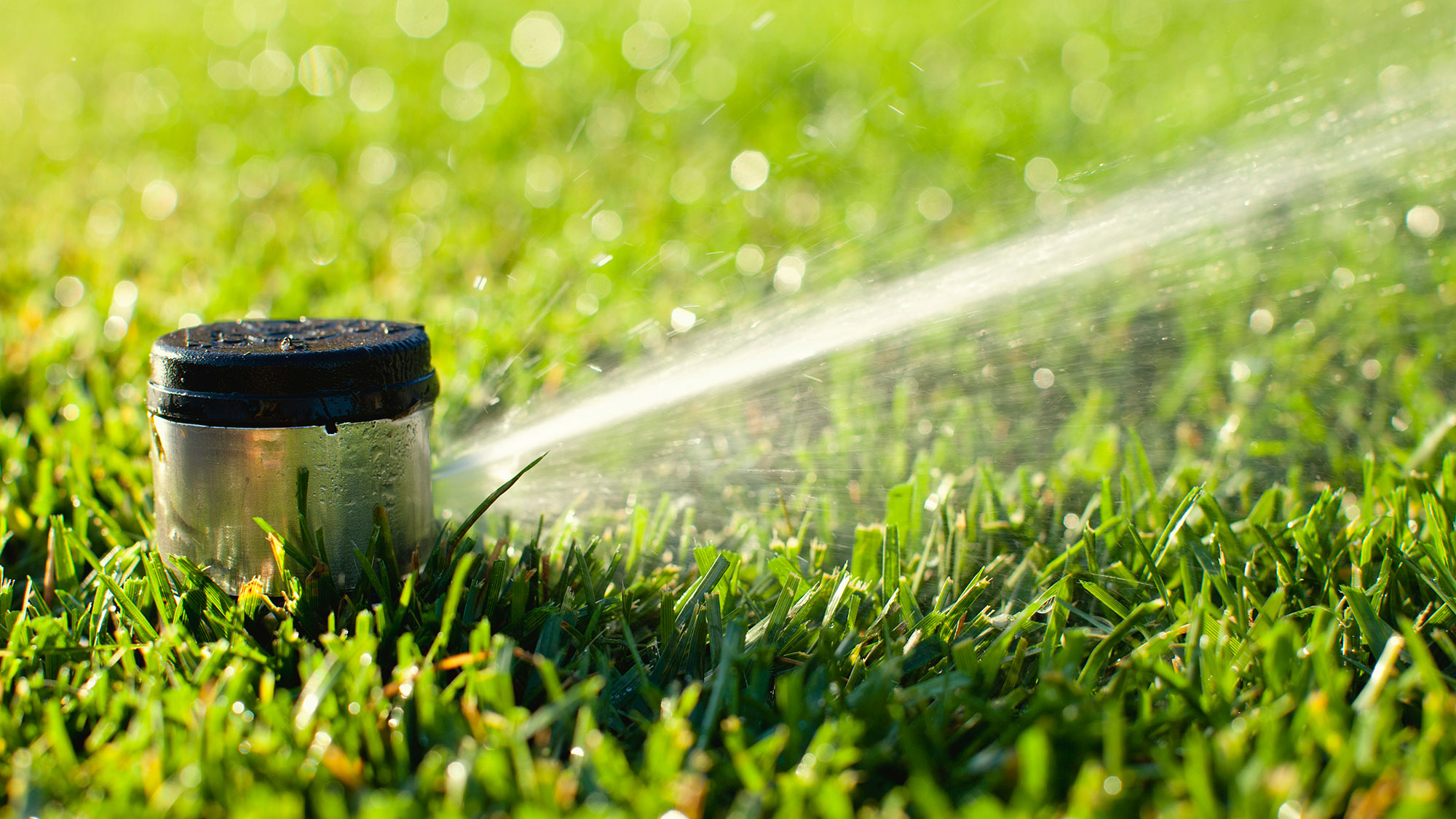 a sprinkler waters a lawn